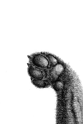 53 husky scan.jpg