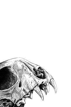 44 cat skull 2.jpg