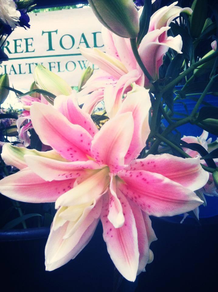 """oriental double bloom, """"Roselily"""""""