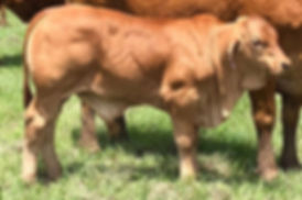Edward bull sml.jpg
