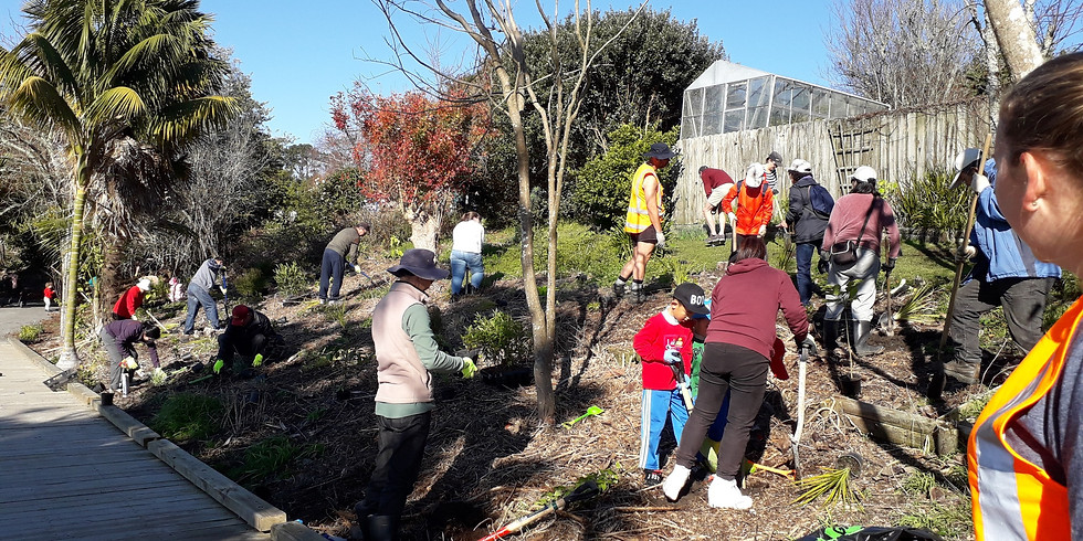 Tiroroa Esplanade Reserve 4 - Public Planting Day