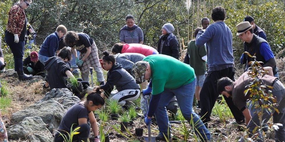 Tree planting at Rosebank Domain