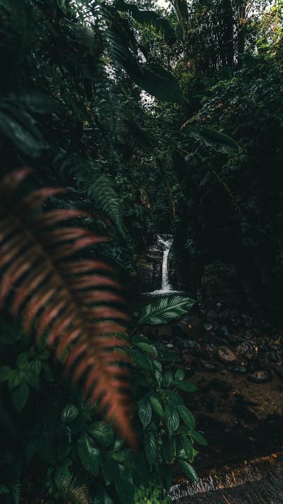 Cascade Martinique.jpg