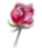 Rose%201_edited.png