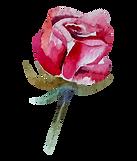 Rose%201_edited.png