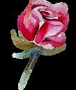 Rose%25201_edited_edited.png