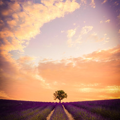 Provence France Landscape Photography