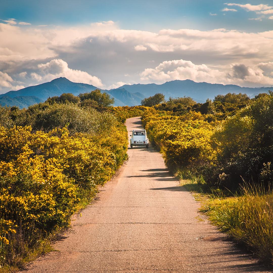 Renault 4 Srping in Sardinia Yellow Flowers_Raffaele Cabras.jpg