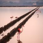 Pink Flamingo sunset - Fenicotteri al tr