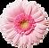 pink-flower-clipart-transparent-backgrou