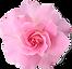 kisspng-pink-flowers-rose-clip-art-rose-
