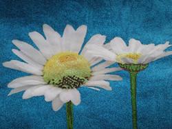Glitter Pop Art Daisy