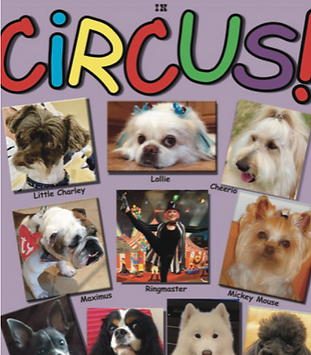 Circus Dogs.png