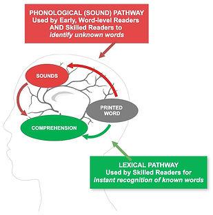 Neural Pathways of Skilled Reading 3.jpg