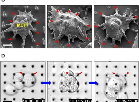 Minimally invasive injections of biomolecules into cells possible with new device