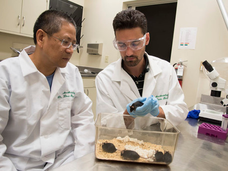 Potential new target identified for treating itch