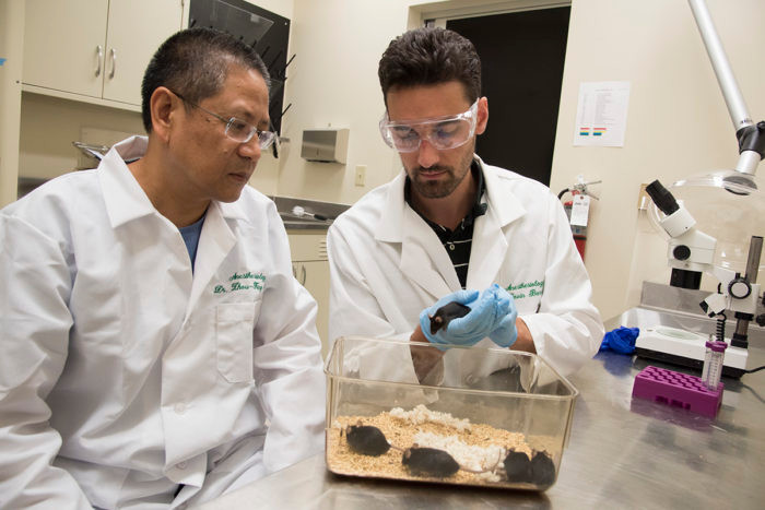 Photo by Robert Boston// Zhou-Feng Chen, PhD (left) and postdoctoral research scholar Devin M. Barry, PhD,