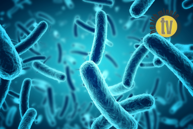 VIDEO: Universal strain of bacteria identified as safe treatment for AD