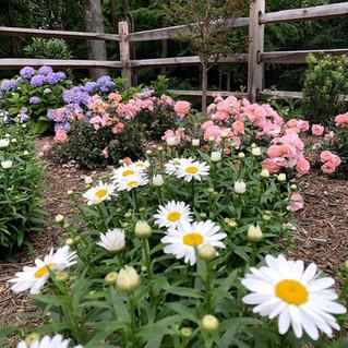 Midsummer Gardens