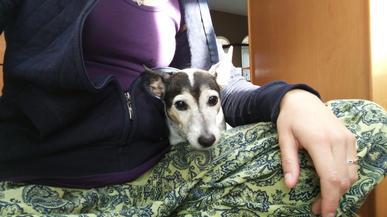 Sarah and Terrier dog.jpg