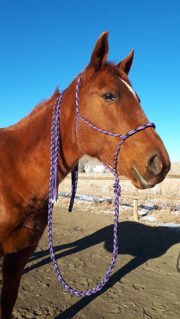 Braided paracord horse halter with lead rope