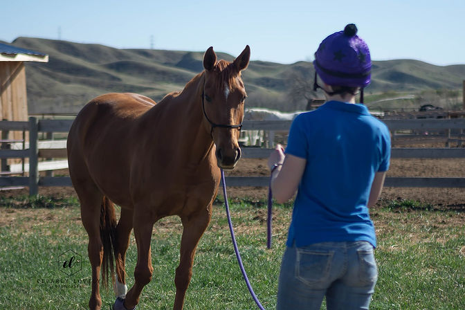 Sarah Laye training her mare, groundwork, in a hand tied rope halter with clinician length lead rope