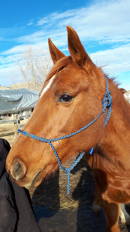 Paracord horse halter, blue & grey