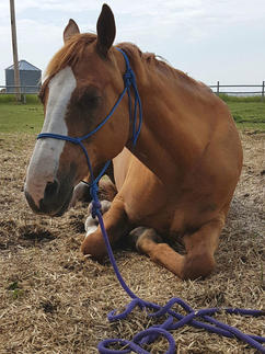Hand tied rope horse halter