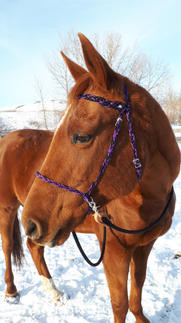 Braided paracord side pull with rope reins