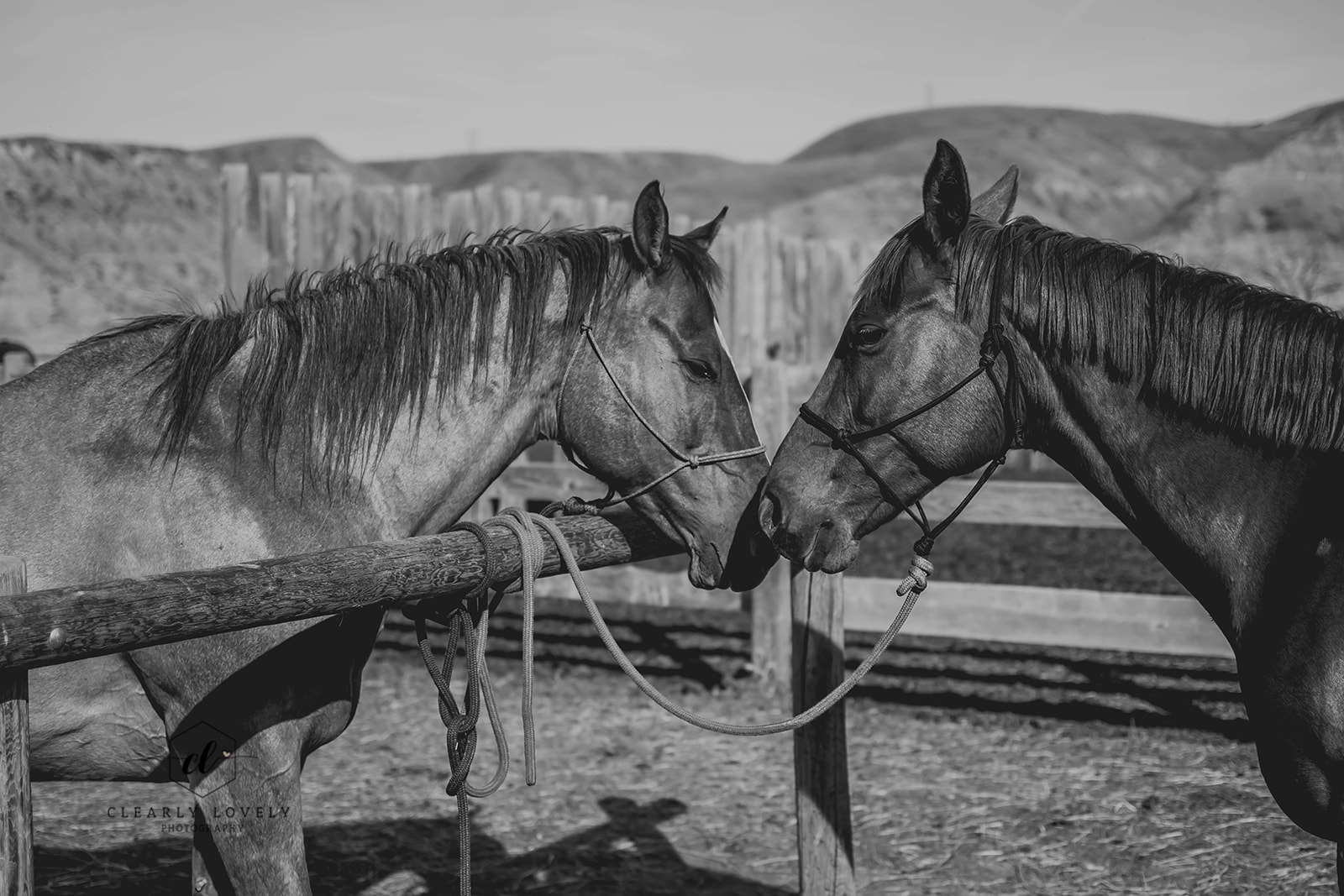 Fragile and Mysteria keep an ear on Clearly Lovely Photography as they stand at the hitching rail.