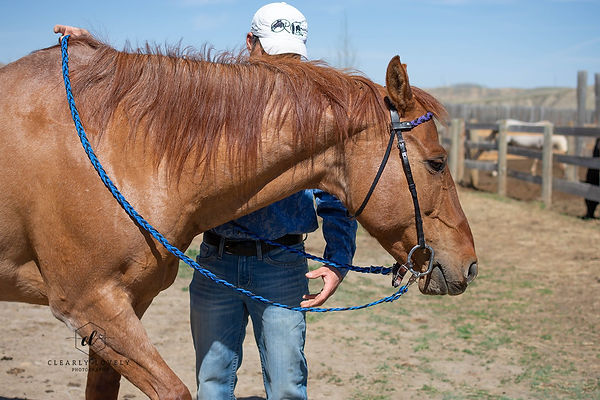 Handmade braided paracord roping style reins for ropers and western riders, Canadian made.