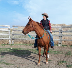 Handmade braided paracord split reins for western riders, made in southern AB.jpg