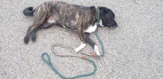 Custom rope and braided pet leash