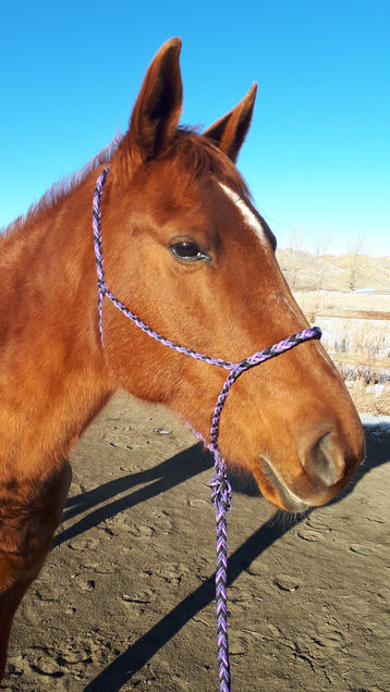 Braided paracord horse halter