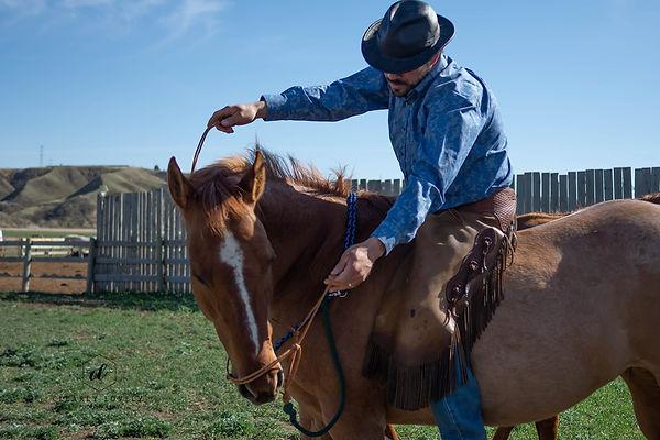 Bob removes Fragile's handmade rope hors