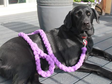 Upcycled leashes