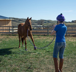 Sarah Laye of Laye's Creations groundworking her mare Mysteria in a hand tied rope halter