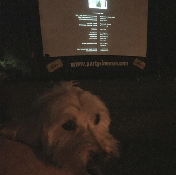 Ourdoor park screening