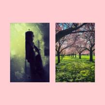 Lucid blossoms
