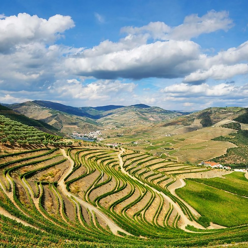 Online Tasting - The Wines of Portugal with Mary Wright
