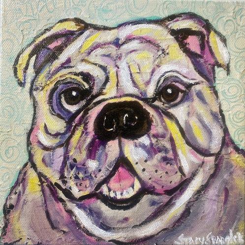 Purple Reign Bulldog