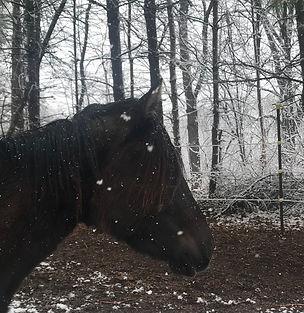 2 - snow poney.jpg