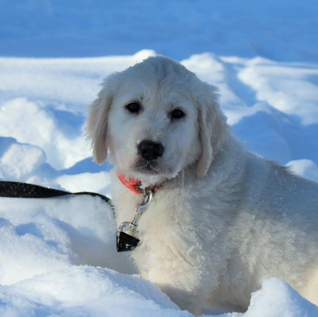 Neva in the snow