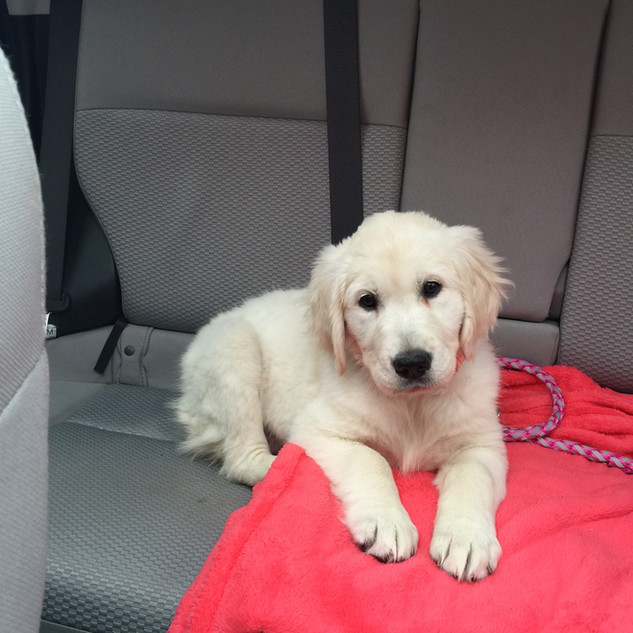 Neva going for a car ride