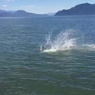 Neva jumping off the dock