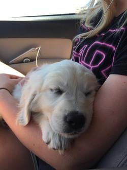 Blaze taking a nap