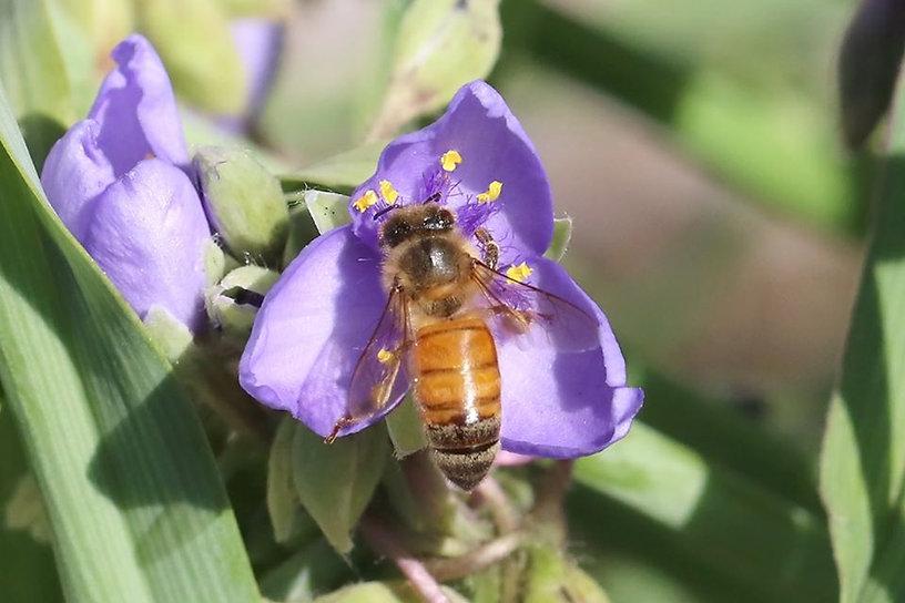 bee working hard.jpg