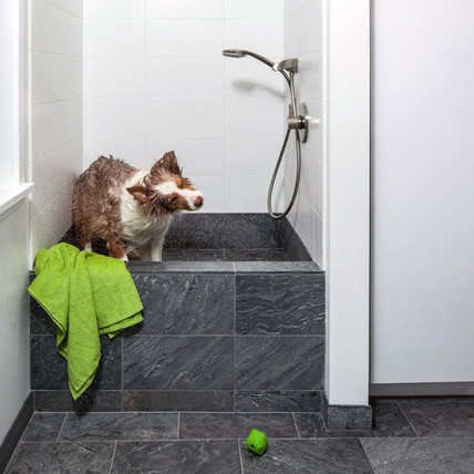 A Clean Dog is a Happy Dog: Dog Showers and Baths are a New Staple in Renovated Homes