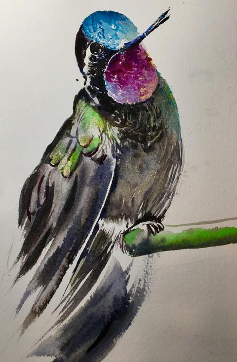 Hummingbird#2