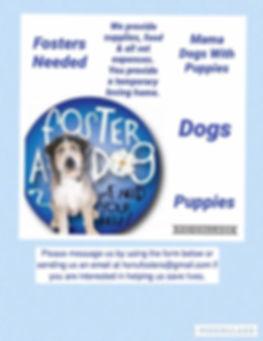 Dog Foster Post.jpg